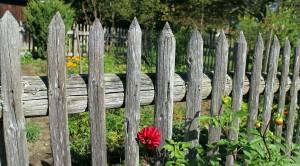 Garten Tipps zum Leben